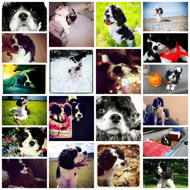 Dog photo collage - cultivatedrambler.com